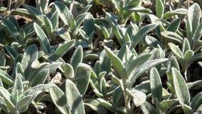 Fondo vegetativo dalle piante di fioritura Immagini Stock Libere da Diritti