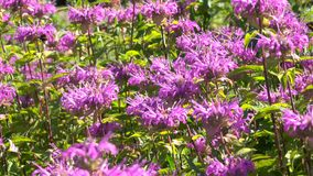 Fondo vegetativo dalle piante di fioritura Fotografia Stock