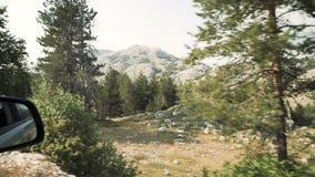 Fondo veloce della sfuocatura di mtion della foresta di estate di vista laterale dell'automobile stock footage