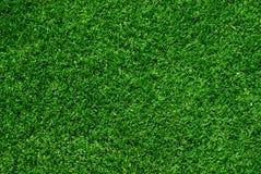 Fondo verdadero de la hierba verde Fotos de archivo libres de regalías