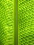 Fondo verde. Fotos de archivo