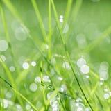 Fondo verde Fotografia Stock