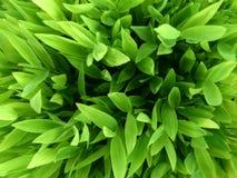 Fondo verde Imagenes de archivo