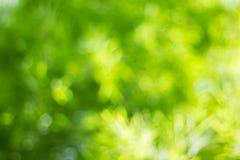 Fondo verde Foto de archivo libre de regalías