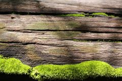 Fondo verde fotografie stock libere da diritti