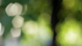 Fondo verde abstracto almacen de video