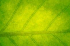 Fondo verde abstracto con una hoja Foto de archivo