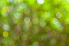 Fondo verde abstracto de la falta de definición de Boke imagen de archivo