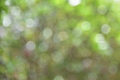 Fondo verde abstracto de la falta de definición de Boke fotos de archivo