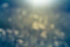 Fondo verde abstracto de la naturaleza en el día soleado, foco selectivo Imagen de archivo