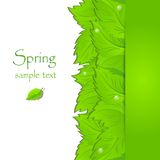 Fondo verde abstracto de la primavera Foto de archivo