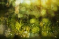 Fondo verde abstracto de la primavera Imagen de archivo