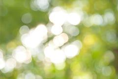 Fondo verde abstracto soleado de la naturaleza Fotos de archivo