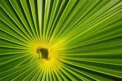 Fondo verde astratto Fotografia Stock