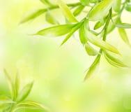 Fondo verde astratto con bambù Immagine Stock