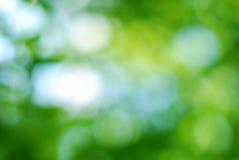 Fondo verde astratto del bokeh Immagini Stock Libere da Diritti