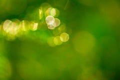 Fondo verde borroso Fotografía de archivo libre de regalías
