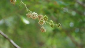 Fondo verde borroso borroso de la flor Imagenes de archivo
