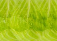 Fondo verde chiaro di struttura del cavolo naturale di verdure della foglia fotografia stock