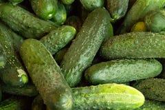 Fondo verde Cibo organico Rivenditore di agricoltura Alimento della natura del ` s dell'agricoltore cetriolo fresco nel supermerc Fotografia Stock