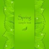 Fondo verde claro abstracto de la primavera Fotos de archivo libres de regalías
