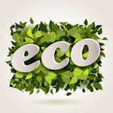 Fondo verde claro abstracto del eco Fotografía de archivo libre de regalías