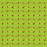 Fondo verde claro de bellotas Imagen de archivo libre de regalías