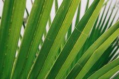 Fondo verde claro de la naturaleza Foto de archivo libre de regalías