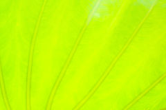 Fondo verde claro de la naturaleza del extracto de la hoja Fotos de archivo libres de regalías