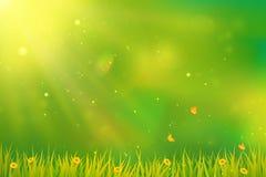 Fondo verde con la hierba, las flores y las mariposas Fotos de archivo libres de regalías
