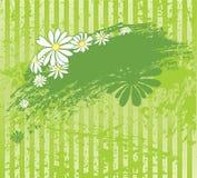 Fondo verde con la margarita Imágenes de archivo libres de regalías