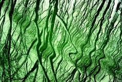 Fondo verde con la reflexión Imagenes de archivo