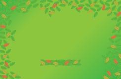 Fondo verde con las hojas Foto de archivo libre de regalías