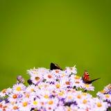 Fondo verde con las mariposas y las abejas en las flores fotos de archivo