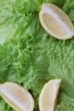 Fondo verde con lattuga ed il limone Immagini Stock