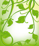 Fondo verde con los elementos florales Fotografía de archivo