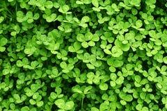Fondo verde con los tréboles Día de StPatrick Fotos de archivo