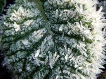 Fondo verde congelato Fotografia Stock
