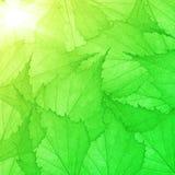 Fondo verde dalle piccole foglie Immagine Stock Libera da Diritti