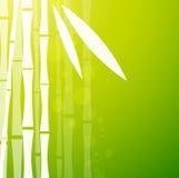 Fondo verde de bambú Fotografía de archivo