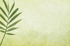 Fondo verde de Grunge con la hoja de palma fotografía de archivo libre de regalías
