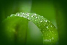 Fondo verde de la ecología Imagen de archivo libre de regalías
