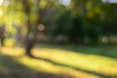Fondo verde de la falta de definición del árbol en jardín Imagen de archivo