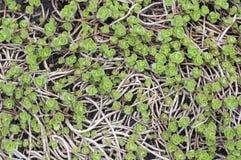 Fondo verde de la flor Imágenes de archivo libres de regalías