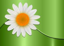 Fondo verde de la flor libre illustration