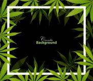 Fondo verde de la hierba de la marijuana de la droga de la hoja del cáñamo imagenes de archivo