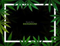 Fondo verde de la hierba de la marijuana de la droga de la hoja del cáñamo fotografía de archivo