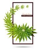 Fondo verde de la hierba de la marijuana de la droga de la hoja del cáñamo foto de archivo