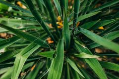 Fondo verde de la hoja Foto de archivo libre de regalías