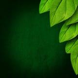 Fondo verde de la hoja Imagenes de archivo